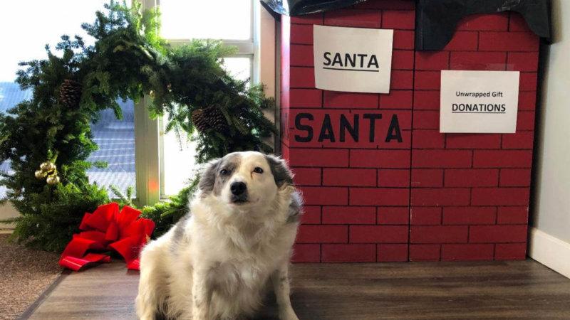 Layle Guarding Santa's Gifts