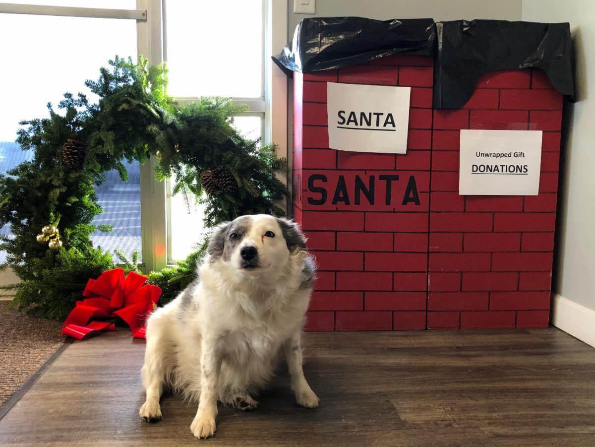 Layla Guarding Santa's Gifts